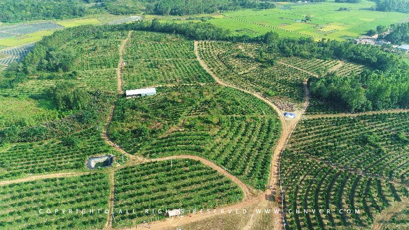 【全域分享】航拍中科富硒廉江红橙基地,领略廉江红橙生态种植